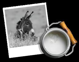 Donkey and Donkey Milk Image