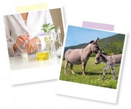Donkey Polaroids